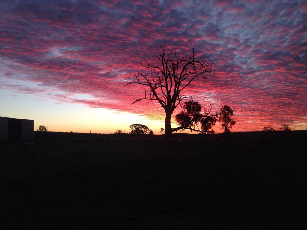 Hanwood-Fish-Hatchery-Farm-Sunset-with-Tree-min