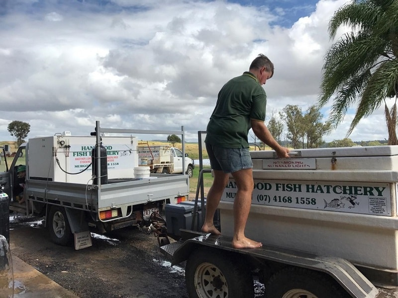 Transporting Freshwater Fish Fingerlings Hanwood Fish